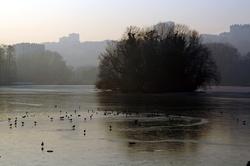 Oiseaux dans le lac