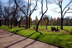 Ombres d'arbres dans le parc