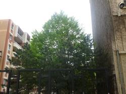 Végétation urbaine, l'arbre urbain