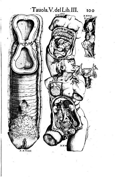 Anatomia del corpo humano composta per M. Giovan. Valverde di Hamusco, et da luy con molte figure di rame, et eruditi discorsi in luce mandata