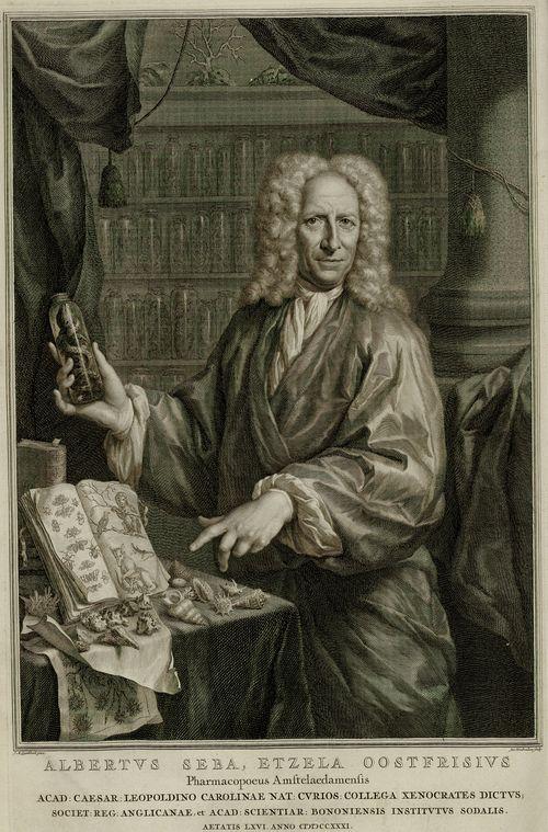 Portrait d'Albertus Seba