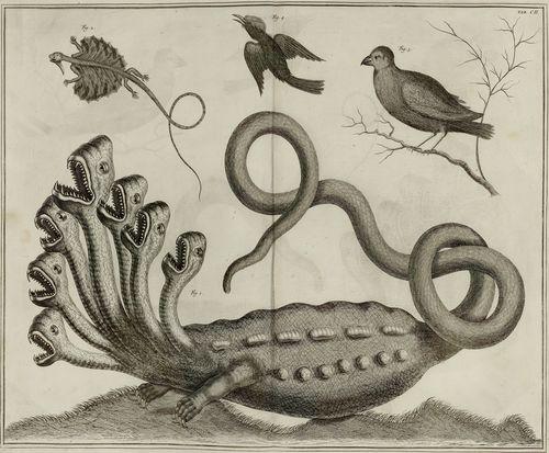 Hydre ou serpent à sept têtes (Seba)