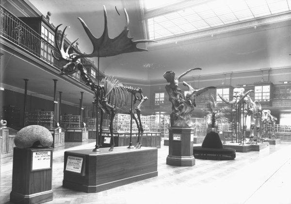 [La Grande salle du Muséum d'histoire naturelle de Lyon, dit musée Guimet, au boulevard des Belges]