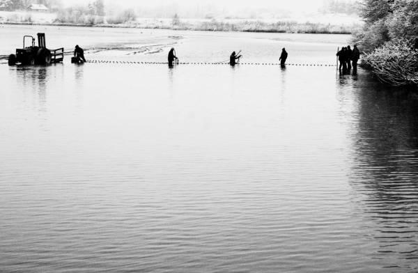 Pêche dans la Dombes 02/36 : Les pêcheurs mettent en place un deuxième filet...