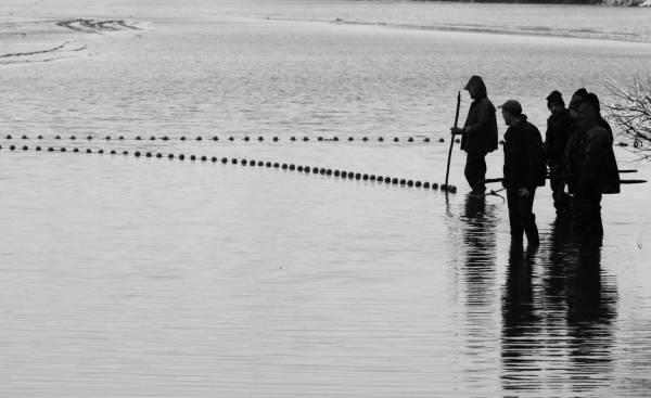 Pêche dans la Dombes 03/36 : Les pêcheurs tirent le filet à tour de rôle...