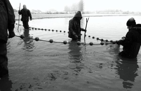 Pêche dans la Dombes 13/36 : Les pêcheurs installent les fourchettes...