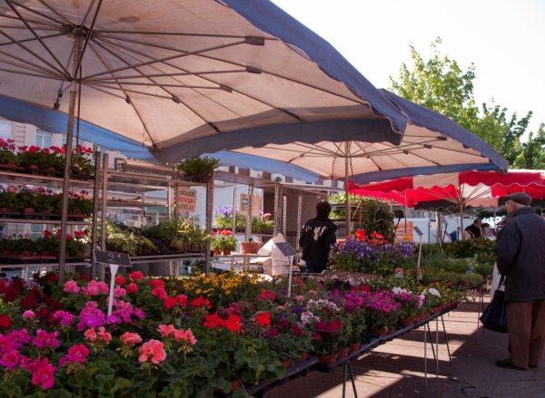 Un fleuriste sur le marché, quai des Célestins