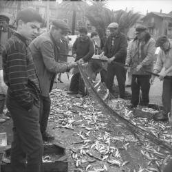Pêche collective dans le Var