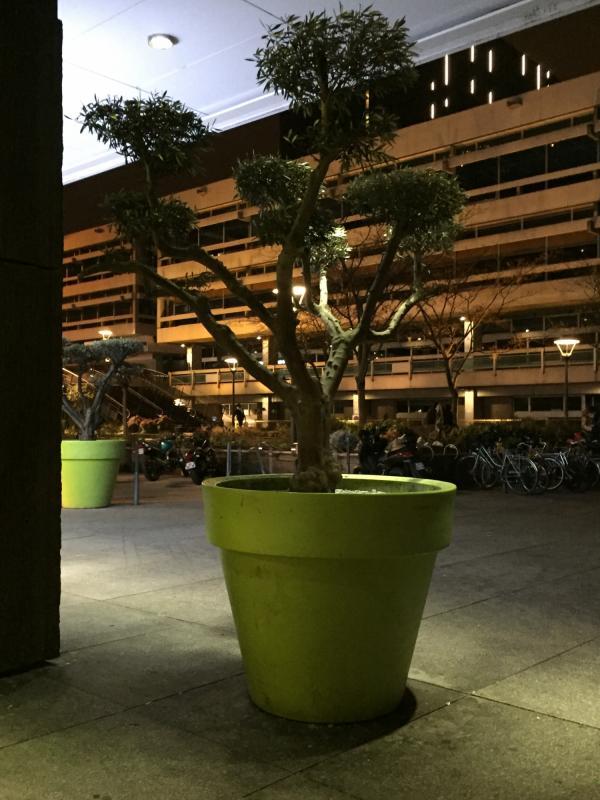 L'arbuste