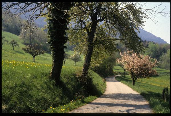 [Route, Trévignin]