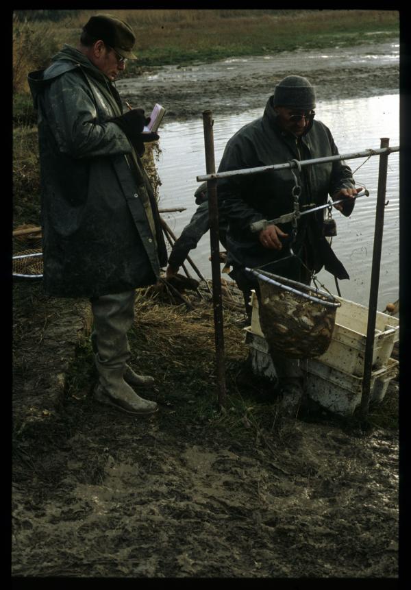 [Pêche dans un étang de la Dombes, Lapeyrouse]