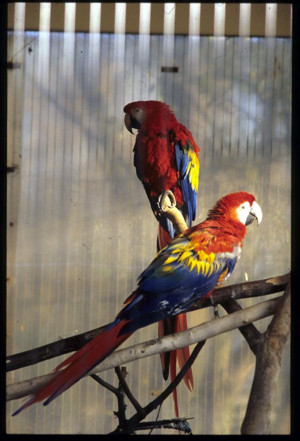 [Des perroquets au parc ornithologique de Villars-les-Dombes]