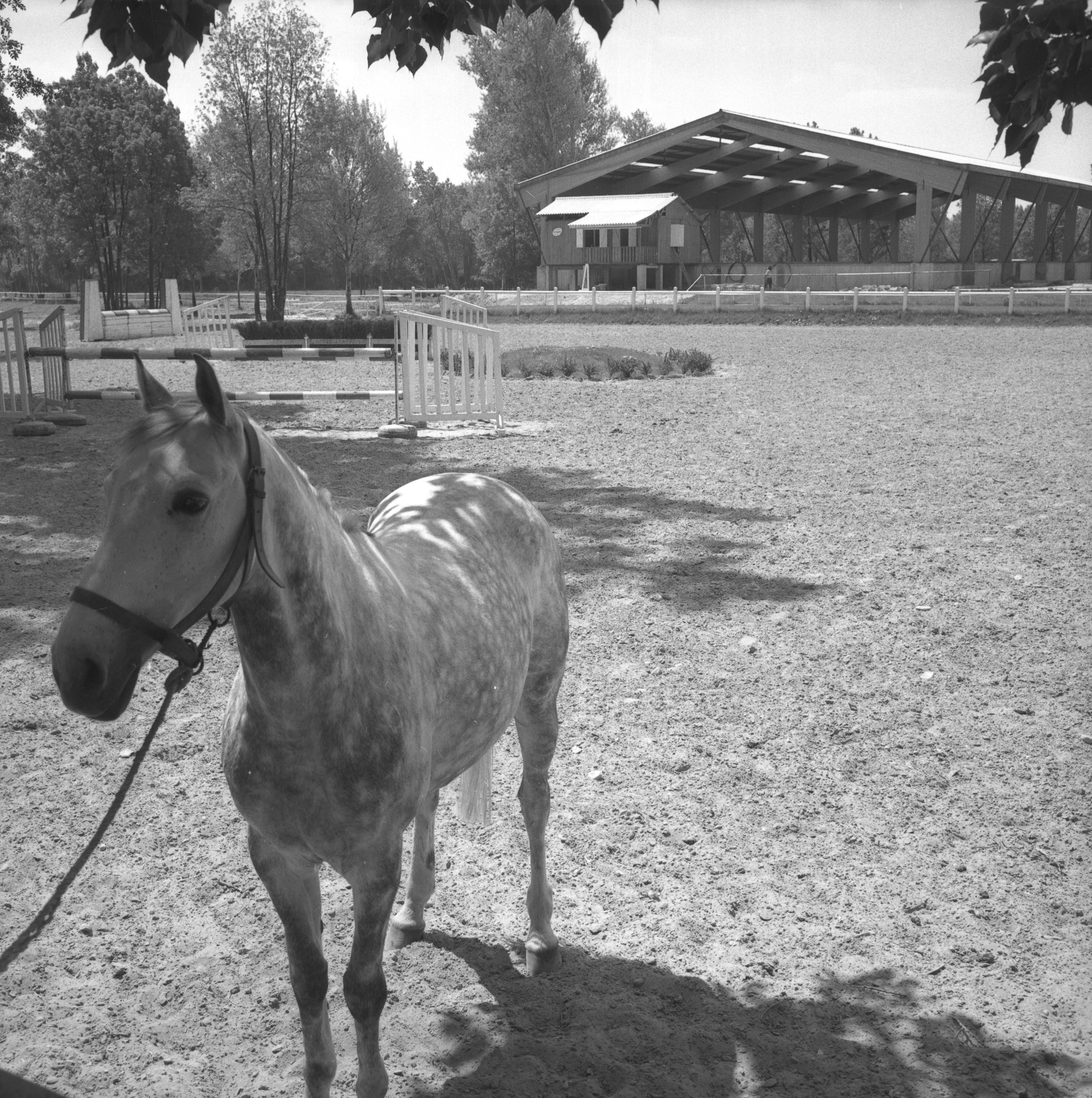 centre equestre neron