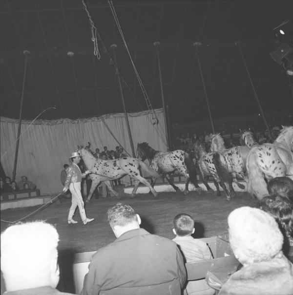 Cirque Rancy et sa ménagerie