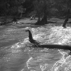 [Un arbre mort au milieu d'une rivière]