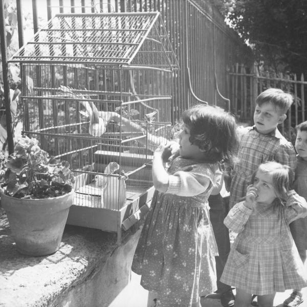 [Une petite fille essaie de se saisir de l'oiseau dans sa cage sous l'œil attentif d'autres enfants]