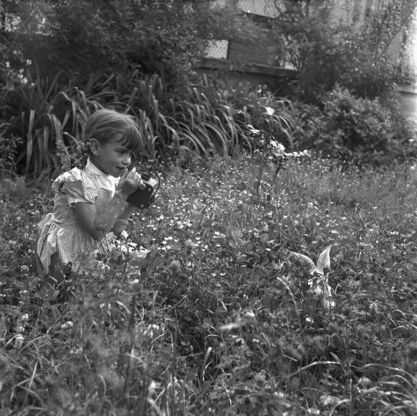 [Séance photo : le lapin seul dans les herbes du jardin]