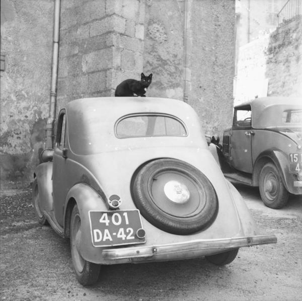 [Chat noir sur le toit d'une Simca 5]