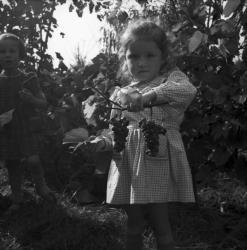 [Une petite fille et deux grappes de raisin à la la main]