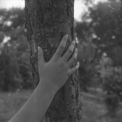[Une main posée sur un tronc d'un arbre]