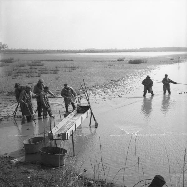 [Les pêcheurs rassemblent le poisson près de la grande table en bois appelée gruyère]
