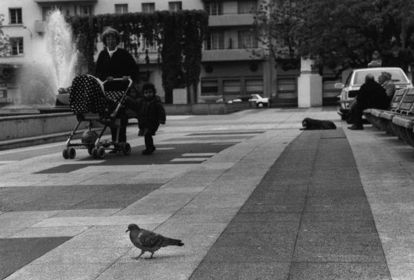 [Les pigeons en millieu urbain]