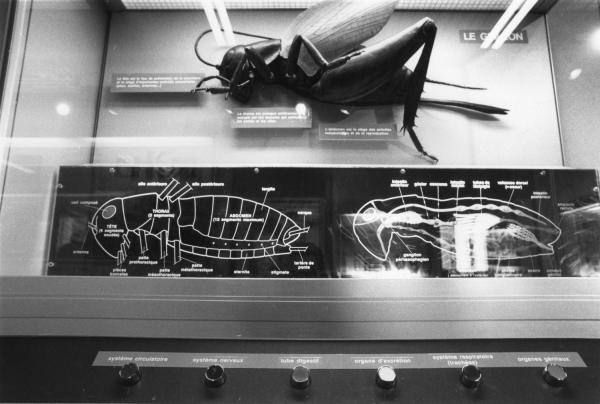 [Salle d'entomologie du musée Guimet]
