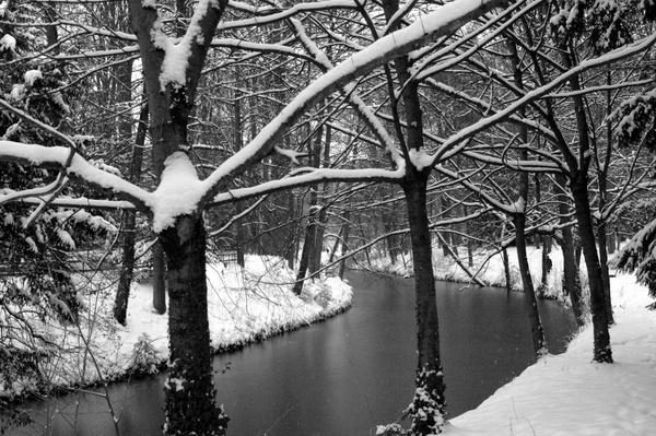 Lac et arbres sous la neige