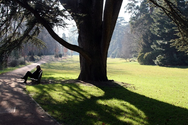 Banc à l'ombre d'un arbre