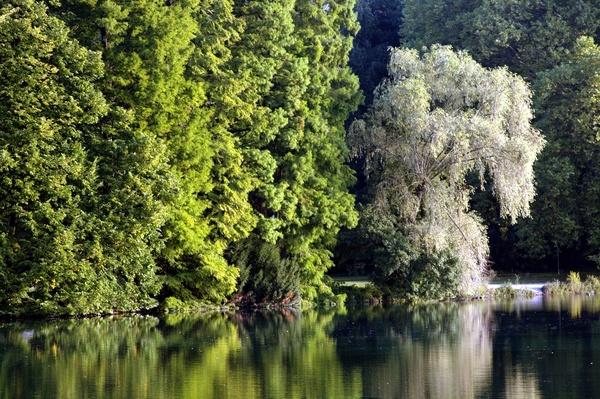 Reflets d'arbre dans l'eau