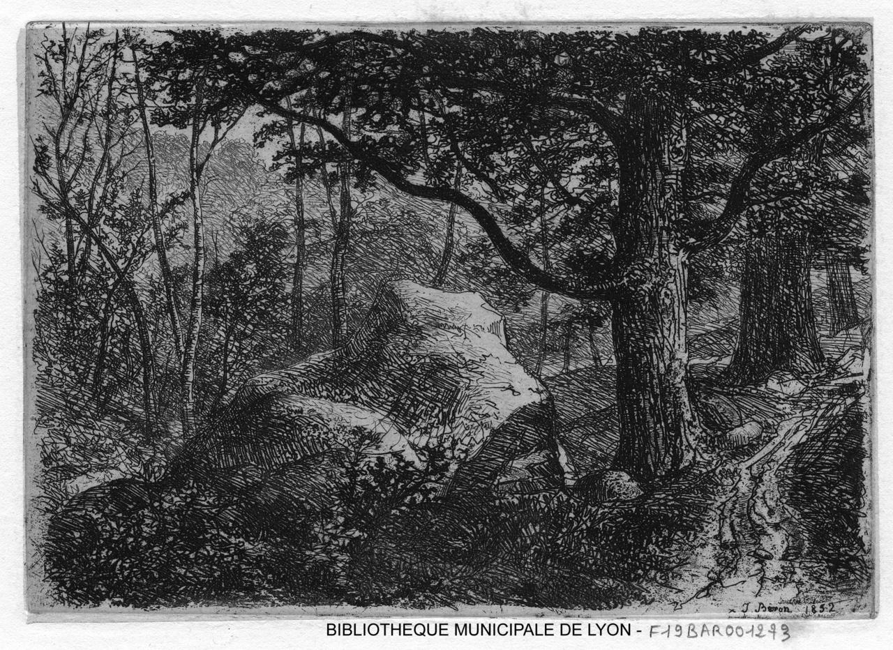 De FontainebleauNid De Forêt FontainebleauNid De Forêt L'aigle Forêt Forêt De L'aigle FontainebleauNid L'aigle hrdCtQxBs